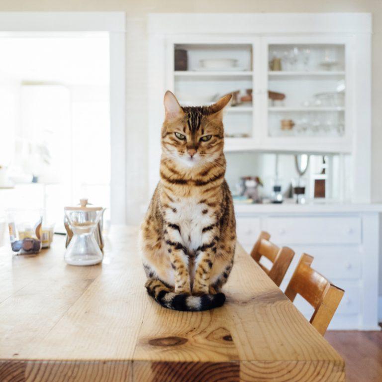 JULIE : Quand j'ai supprimé l'essuie-tout de ma cuisine et que tout se passe très bien !