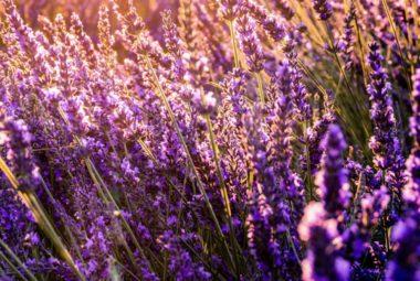 Plantes Médicinales : remède de grand-mère ou nouvelle tendance ?