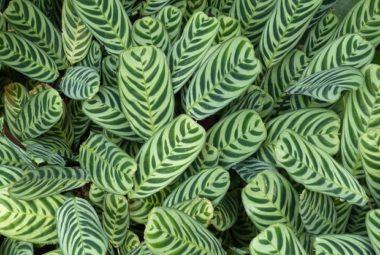 Asmae de Take it Green nous parle beauté de la peau
