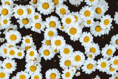 Le top 5 des plantes médicinales apaisantes