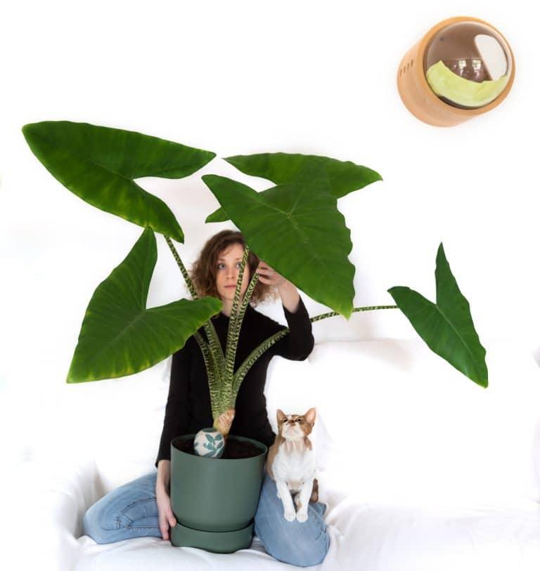 AUDREY (PLANTIPLANT) ET SON AMOUR POUR LES PLANTES !