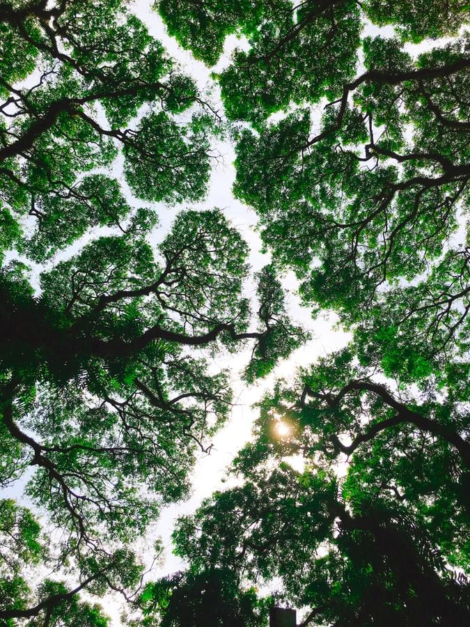 La santé liée à la biodiversité