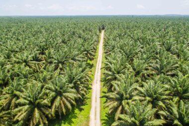 Pas d'huile de palme chez GreenMa